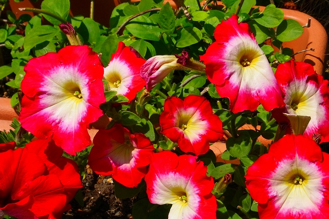 110505-flower01.jpg