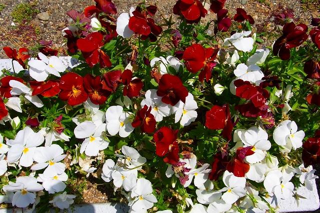 110505-flower09.jpg