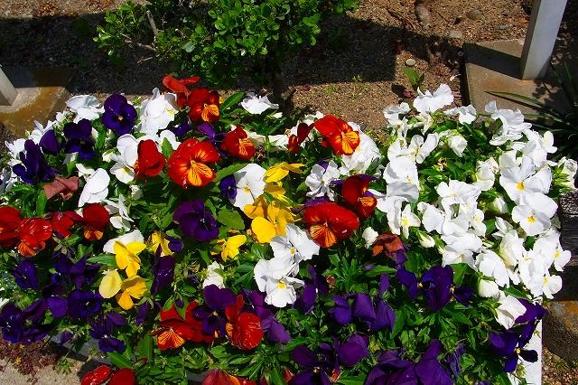 110505-flower06.jpg