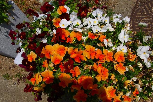 110505-flower08.jpg