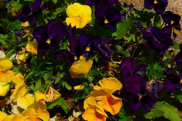 110505-flower010.jpg