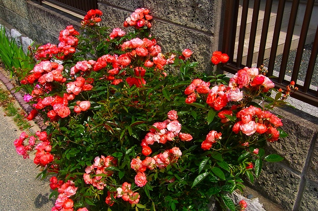 110505-flower011.jpg