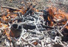 乾いたら火の中へ