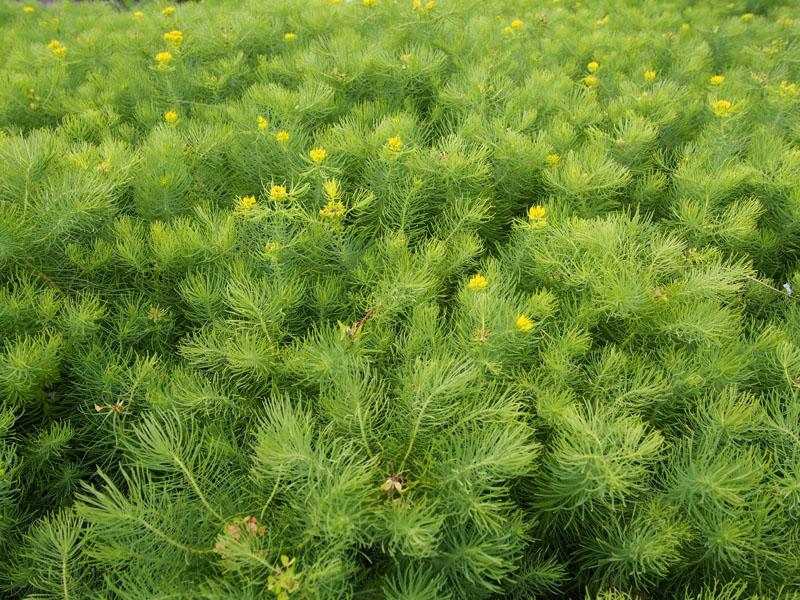 grass000.jpg