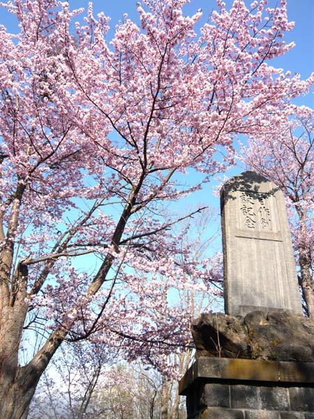 鎮魂碑と桜