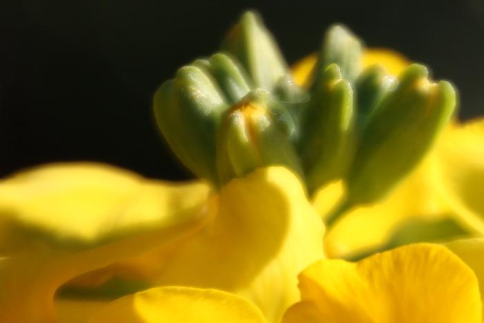 シー・エントランスの花