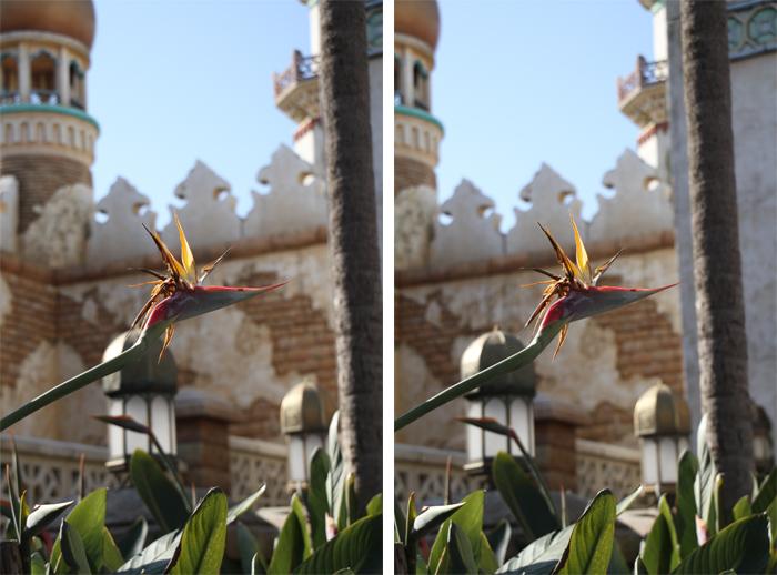 アラビアの花(立体)