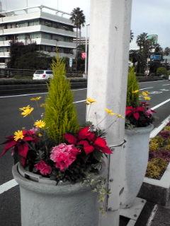 橘橋の上花壇101119