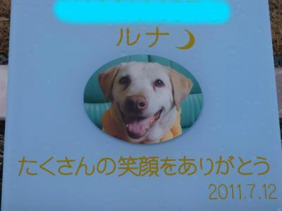 snap_noaruenolife_20123223450.jpg