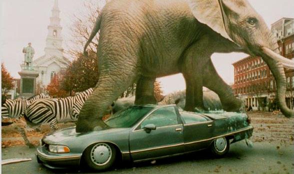 象が踏んでも・・・ (1)