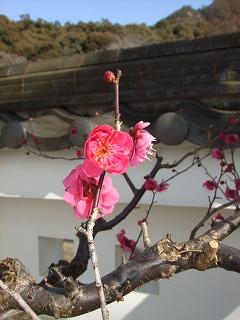 2011.02お散歩 011