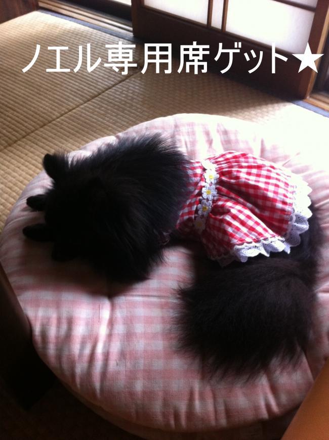 トリミング&お彼岸+023_convert_20110928224058