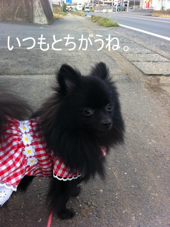 トリミング&お彼岸+032_convert_20110928224235