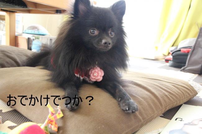 ノエ+053_convert_20110929231429
