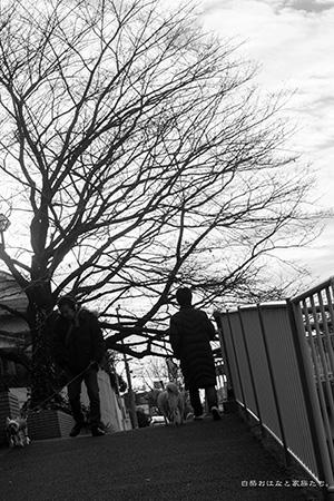 20131217-_MG_0539.jpg