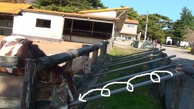 20101108091747(3).jpg