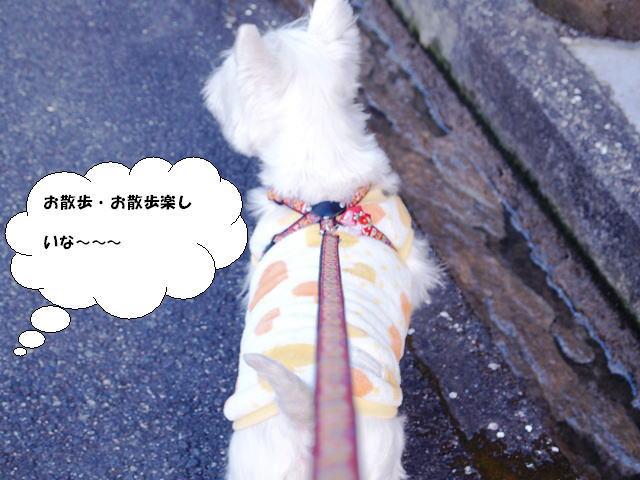 imageお散歩お散歩