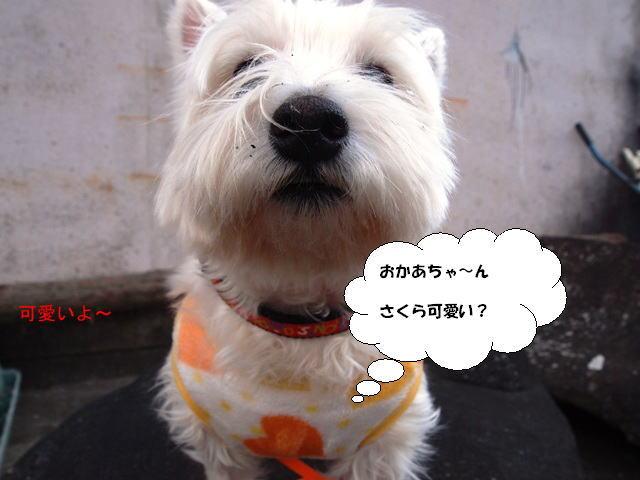 imageおかあちゃん~