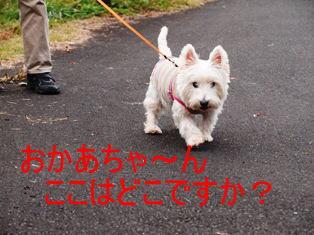 imageおかあちゃ~んここはどこですか?