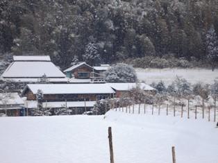 雪が降ったよ~ 017