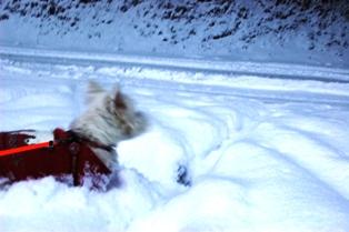 今日も雪が・・・ 039