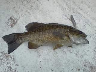 20100615 ジグヘッドで釣れた