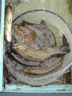 20100626 伊藤さん 大漁