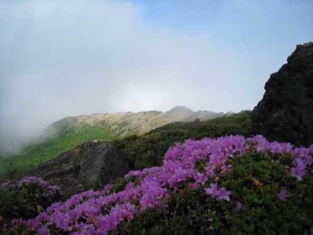 深山霧島 1