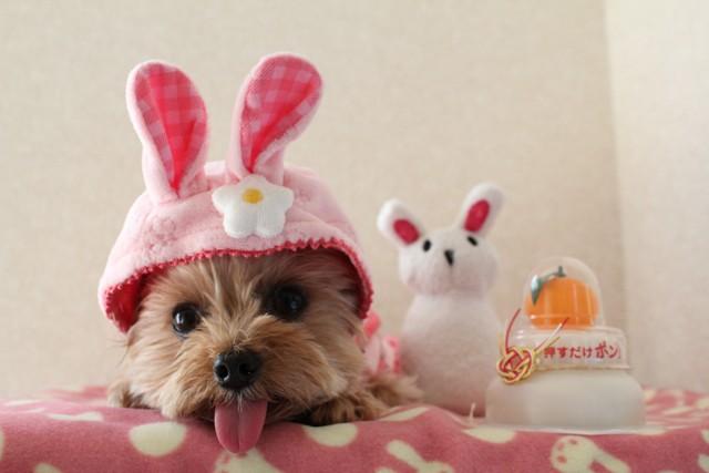 伏せたウサギがピョンピョン