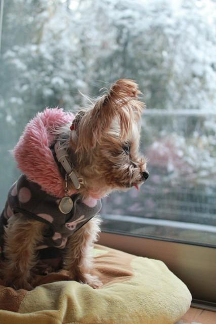 雪降って・・・