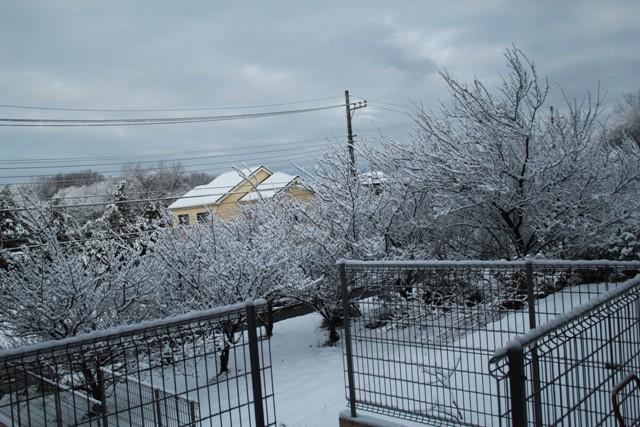 朝起きたら雪~