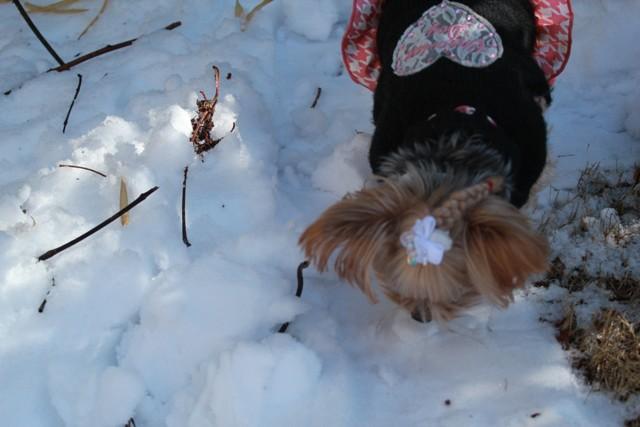 雪食べれるかな