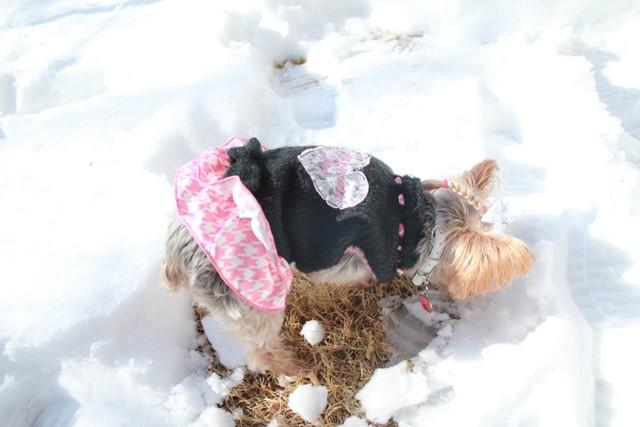 7歳にして雪と遊べた