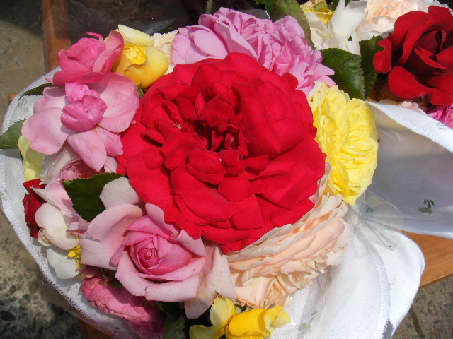 切り出したバラ2