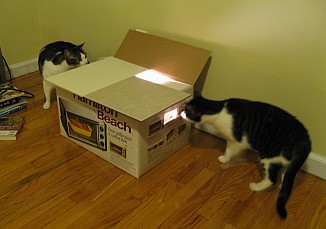 Investigating the box