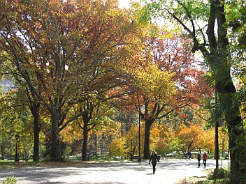 11-11-11 CP trees