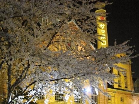 サッポロビール園 外観 桜