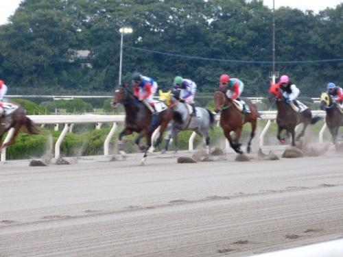 (3)園田最終レース