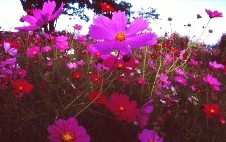 20111012_noririn.jpg