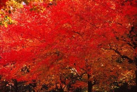 20111130_noririn.jpg