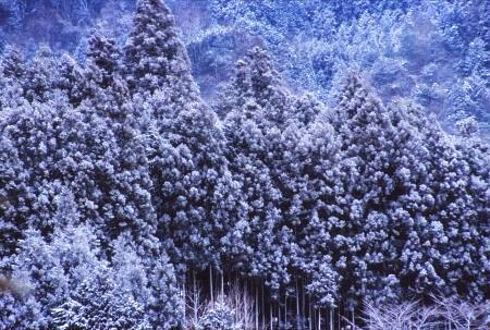 20120106_noririn.jpg