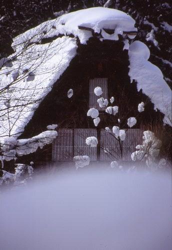 20120206_noririn.jpg