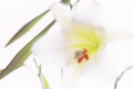 20120404_noririn.jpg