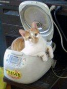 in炊飯器2