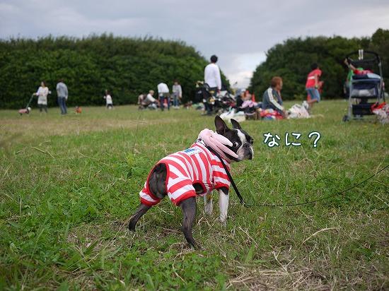 upNiU_20111024092249.jpg