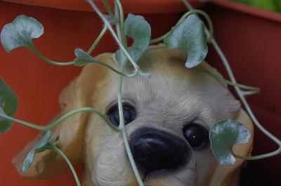 s-可愛い葉っぱ