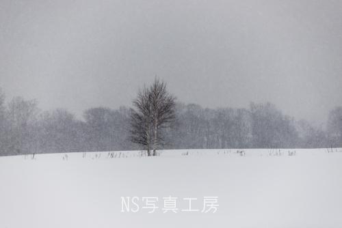 _DSC8380.jpg