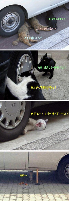 猫の整備士