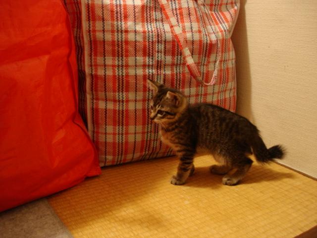 住宅猫 サム♂