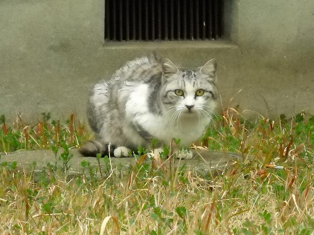 松戸市Tさま 地域猫